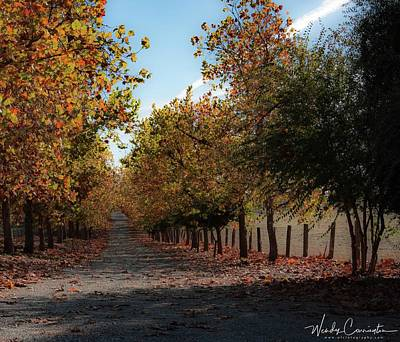 Photograph - Fall Lined Road by Wendy Carrington