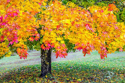 Tapestry - Textile - Fall Maple by Dennis Bucklin