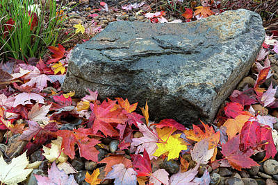 Photograph - Fall Maple Leaves By Rock In Garden Backyard by David Gn