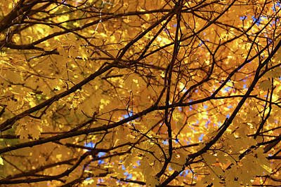 Photograph - Fall Maple Patterns 1 by Mary Bedy