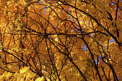 Photograph - Fall Maple Patterns 2 by Mary Bedy