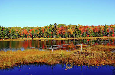 Photograph - Fall Marsh by Debbie Oppermann