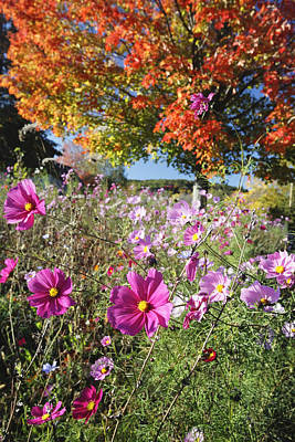 Fall Meadow With Wildfowers Art Print by George Oze