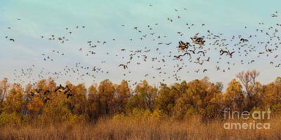 Photograph - Fall Migration by Elizabeth Winter