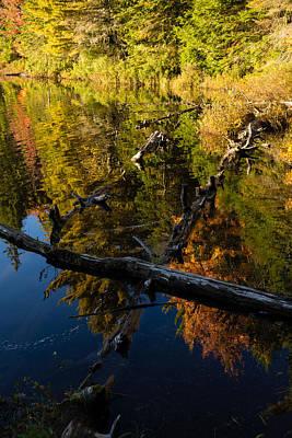 Fall Mirror - Mesmerizing Forest Lake Reflections Print by Georgia Mizuleva