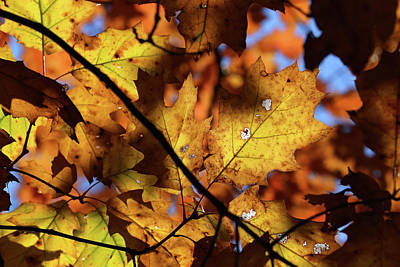 Photograph - Fall Mixture 10 by Mary Bedy