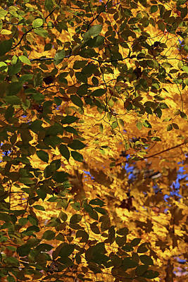 Photograph - Fall Mixture by Mary Bedy