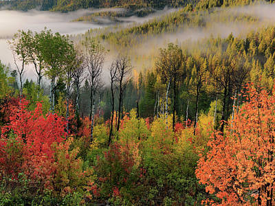 Photograph - Fall Morning by Leland D Howard