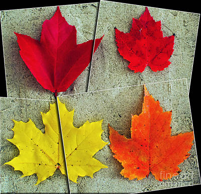 Photograph - Fall Mosaic by Kevin Fortier
