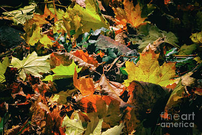 Photograph - Fall Motif by Mariola Bitner