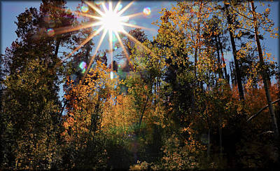 Photograph - Fall Mt. Lemmon 2017 by Elaine Malott