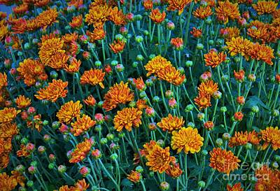 Photograph - Fall Mums Field by Angela J Wright
