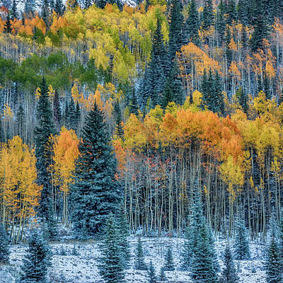 Photograph - Fall Near Ouray Co-2-square Dsc07977  by Greg Kluempers