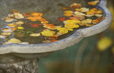 Bird Bath Photograph - Fall Offering by Rebecca Cozart