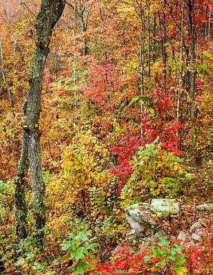 Photograph - Fall On Signal Mountain # 1 by Tom and Pat Cory