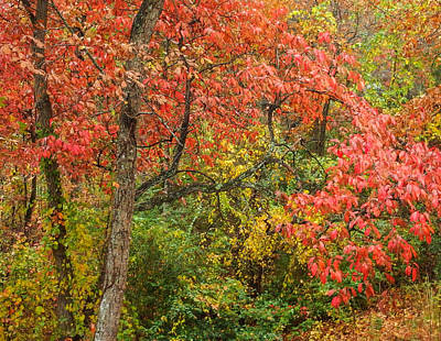 Photograph - Fall On Signal Mountain # 2 by Tom and Pat Cory
