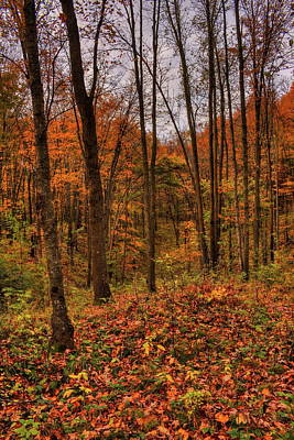 Photograph - Fall On The Ice Age Trail by Dale Kauzlaric