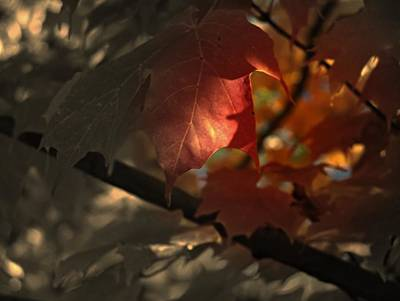 Photograph - Fall Or Not by Richard Ricci