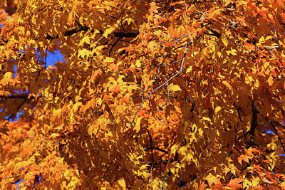 Photograph - Fall Orange 20 by Mary Bedy