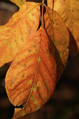 Photograph - Fall Orange 2017 by Mary Bedy