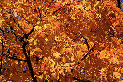 Photograph - Fall Orange 21 by Mary Bedy