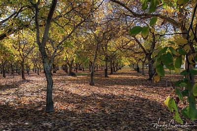 Photograph - Fall Orchard by Wendy Carrington