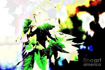 Photograph - Fall Overture by Jenny Revitz Soper