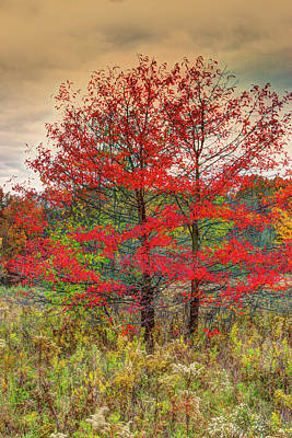 Photograph - Fall Painting by Skip Tribby