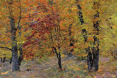 Photograph - Fall Palette by Ed Hall