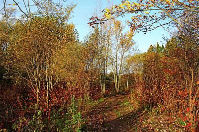 Photograph - Fall Path by Debbie Oppermann