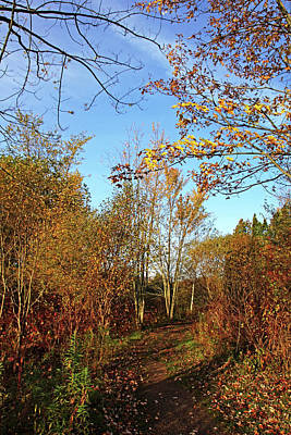 Photograph - Fall Path I by Debbie Oppermann