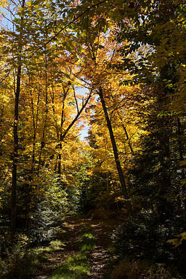 Photograph - Fall Path In Golden Yellow by Georgia Mizuleva
