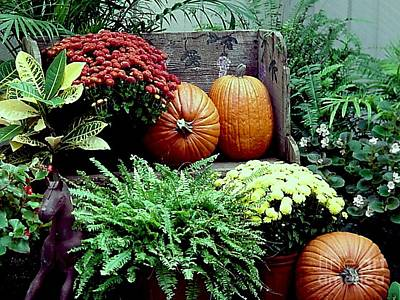 Photograph - Fall Patio Arrangement by Robert D McBain