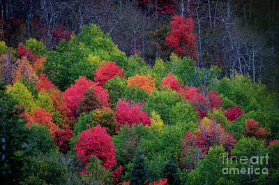 Photograph - Fall Poppers by Bryan Carter