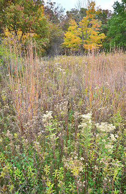 Photograph - Fall Prairie Scene In Moraine Hills by Ray Mathis