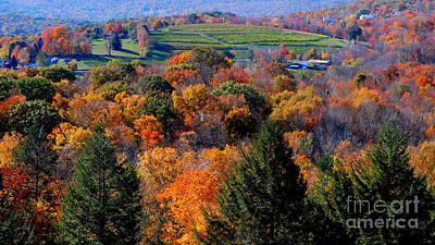 Warren Connecticut Photograph - Fall Profusion by Andrea Simon