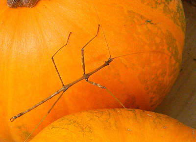 G B Photograph - Fall Pumpkin Visitor by G B