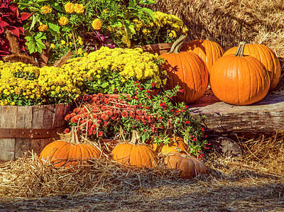 Photograph - Fall Pumpkins by Carolyn Marshall