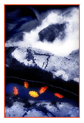 Swallow Photograph - Fall Quintet by Mal Bray