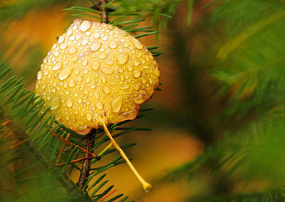 Fall Raindrops Art Print by Adam Pender