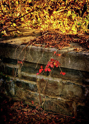 Photograph - Fall Ramblings by Carolyn Derstine