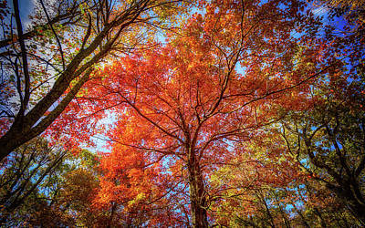 Photograph - Fall Red by Joe Shrader