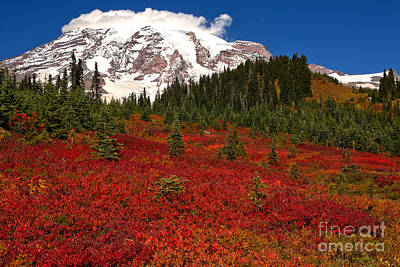 Photograph - Fall Reds At Paradise Meadows by Adam Jewell