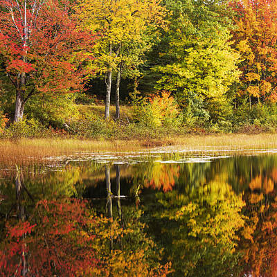 Maine Photograph - Fall Reflection by Chad Dutson