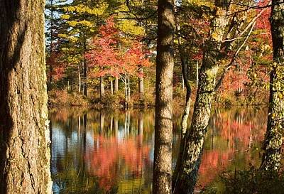 Photograph - Fall Reflection by Patricia Dennis