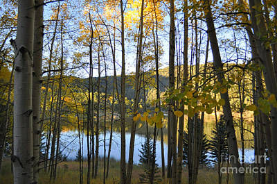 Photograph - Fall Reflections by Anjanette Douglas