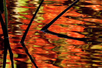 Photograph - Fall Reflections by Inge Riis McDonald