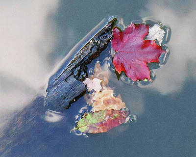 Photograph - Fall Reflections Leaves In The Water by Irina Sztukowski