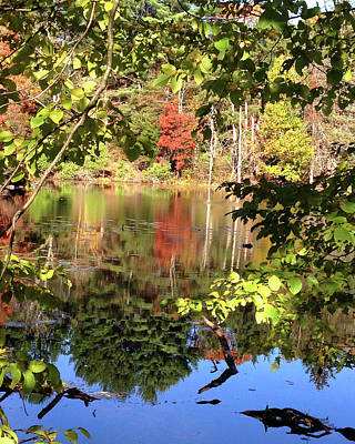 Photograph - Fall Reflections by Nancy Landry