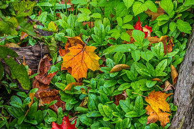 Photograph - Fall by Rhys Templar